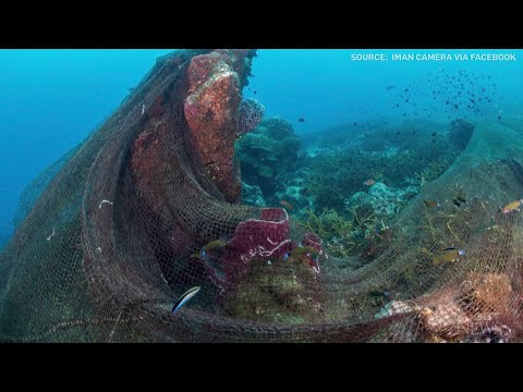 Caught on cam: Fishing net tangled in coral reefs 1