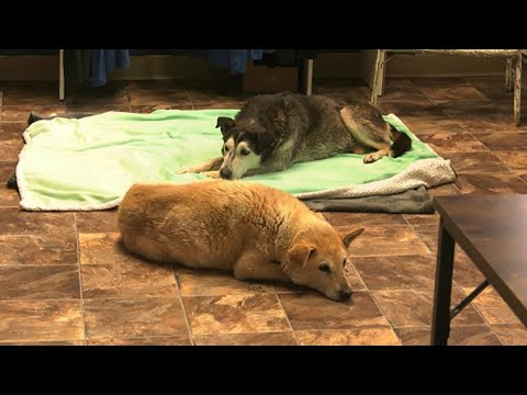 2 old dogs that spent 14 years in the Alta. wild rescued 1
