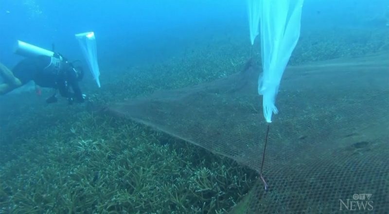 Divers remove fishing nets tangled in protected coral reef 1