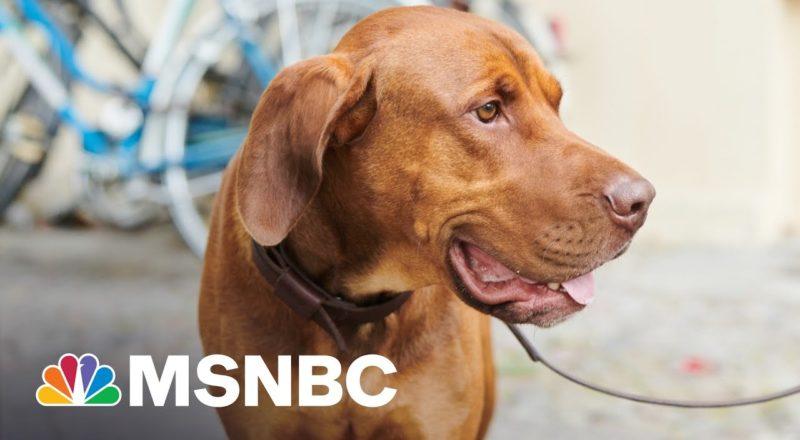 Texas Gov. Abbott Blasted For Vetoing Bill Punishing Dog Abuse 1