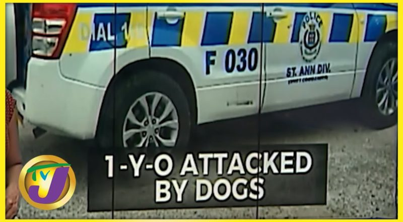 1 Yr Old Attacked by Dogs in St. Ann Jamaica | TVJ News - June 24 2021 1