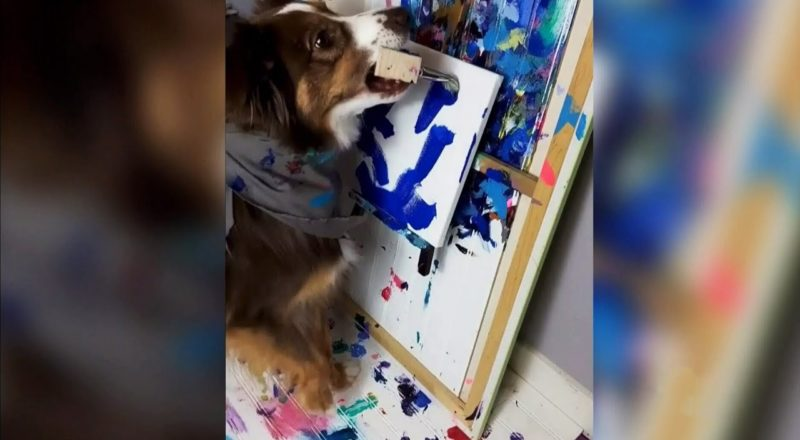 This painting dog in Alberta is raising money for charity 3