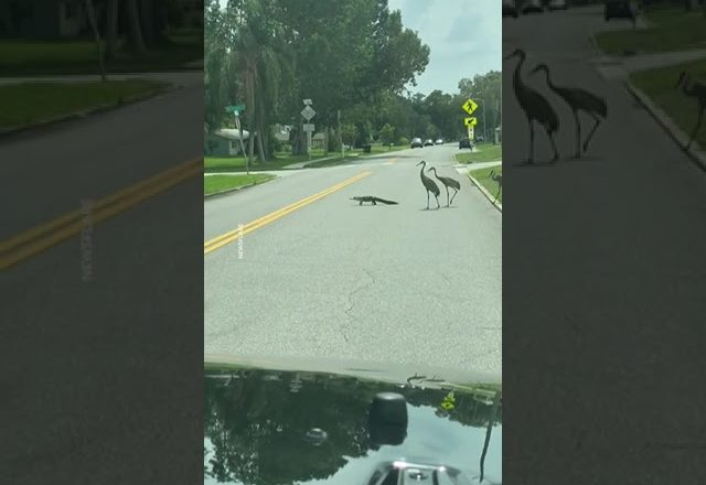 """""""You know you live in Florida when…"""" 🐊 1"""
