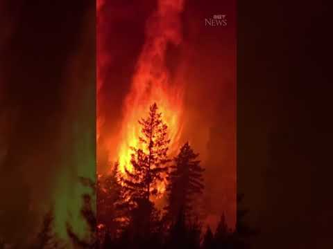 This close-up footage shows a forest fire burning in British Columbia #shorts 1