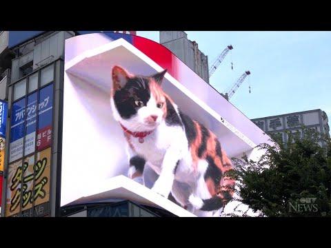 Giant 3D cat billboard dazzles in Tokyo 1