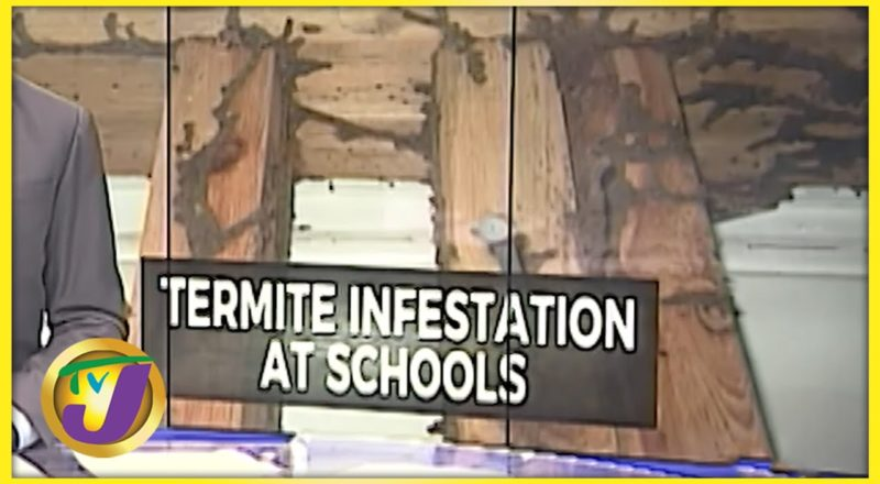 Termite Infestation at Some Schools in Jamaica | TVJ News - July 26 2021 1