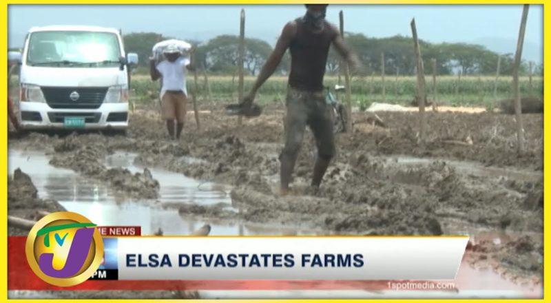 Tropical Storm Elsa Devastates Farms in Jamaica | TVJ News - July 5 2021 7