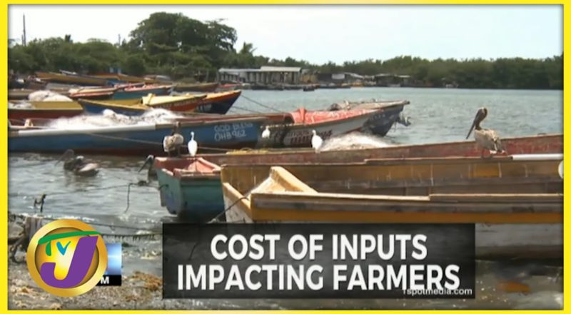 Fisherfolk Lament High Cost of Inputs | TVJ Business - July 13 2021 1