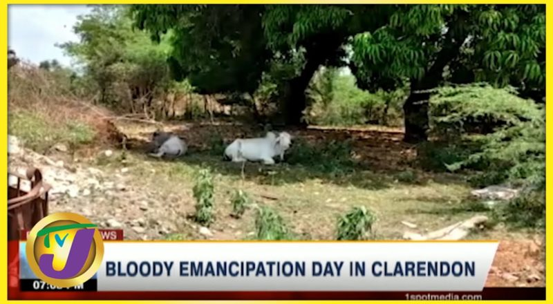 Bloody Emancipation Day in Clarendon   TVJ News - August 2 2021 1