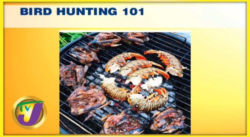 Bird Hunting in Jamaica 101 | TVJ Smile Jamaica 1