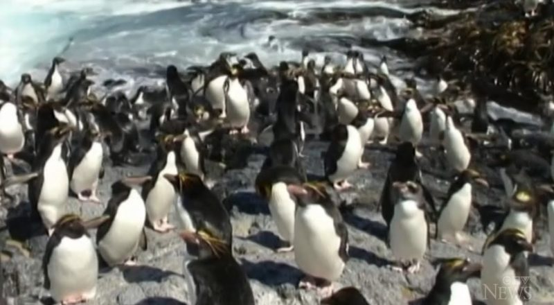 U.S. Agency wants emperor penguins listed as threatened 1