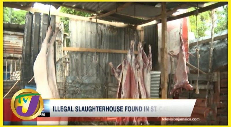 Illegal Slaughterhouse Found in St. Catherine Jamaica   TVJ News - August 14 2021 1