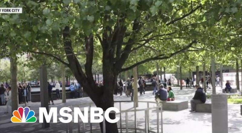 Tree That Survived 9/11 Becomes A Symbol Of Resilience 1