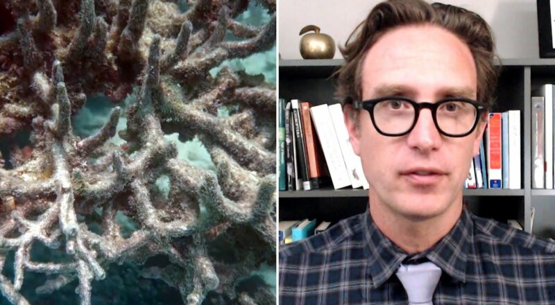 Dan Riskin on how coral may be adapting to climate change 1