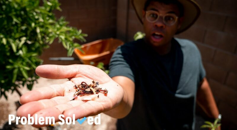 Beginner's guide to gardening | Problem Solved 1