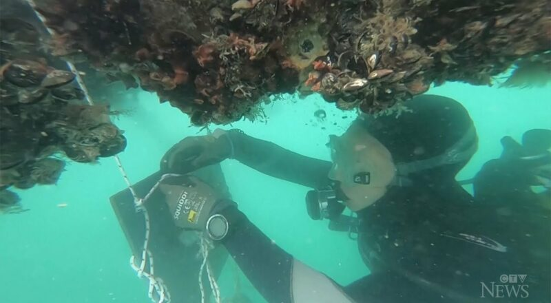 Scientists study climate change in Italy's first 'smart bay' 1