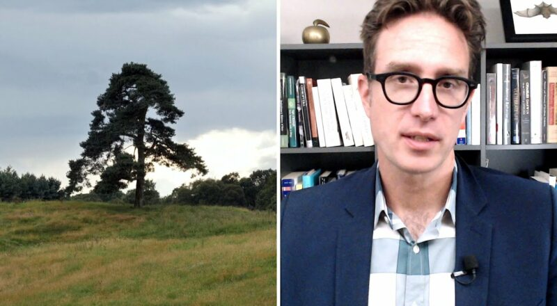 Dan Riskin on how trees are upping their climate change game 1