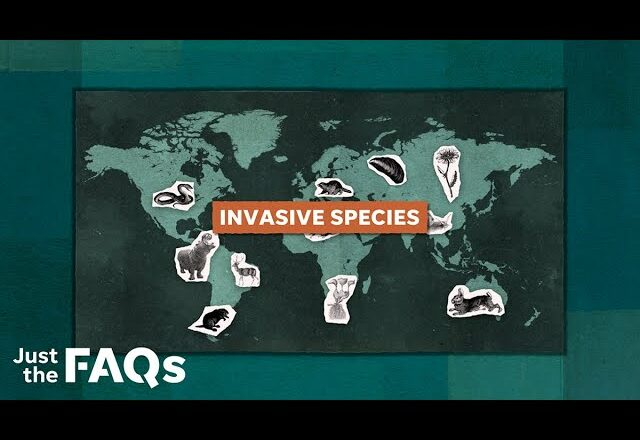 How invasive species became a problem in US | Just the FAQs 8
